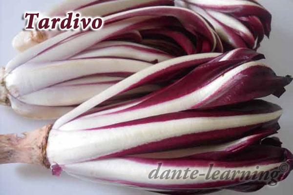 radicchio rosso Tardivo di Treviso
